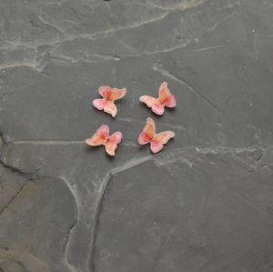 - Kabošon motýlek 9x11mm - oranžovo-růžový
